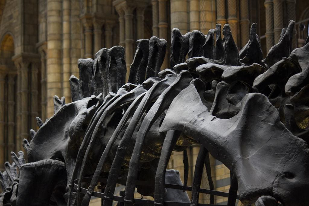 Free Days Out In London - Natural History Museum